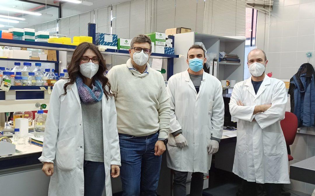 Investigadores del CSIC patentan un nuevo método para producir un potente antioxidante del aceite de oliva