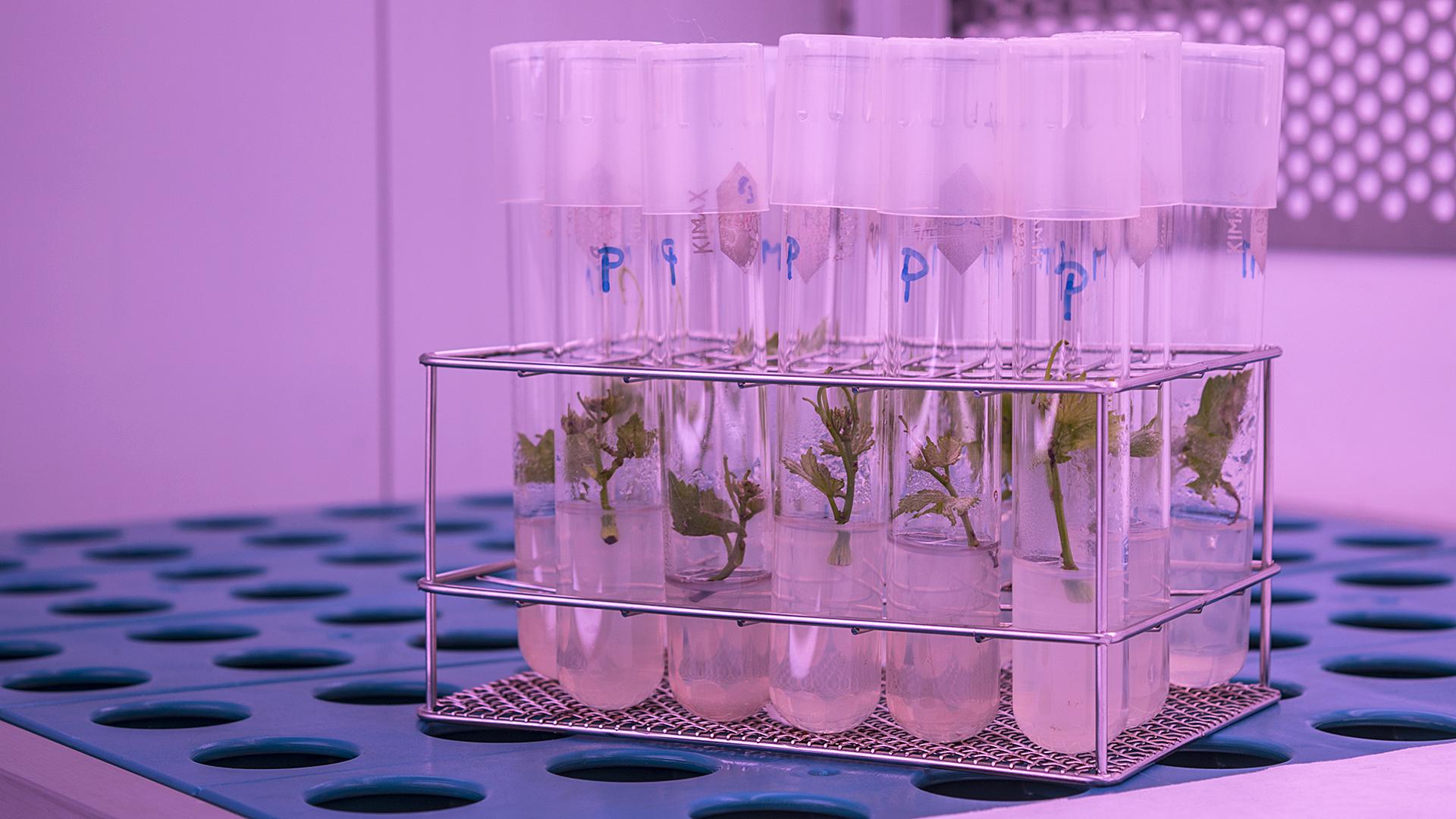 Cultivos IBMPC