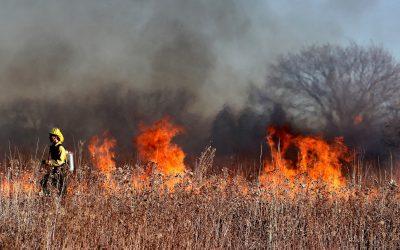 Un estudi del CSIC revela els ingredients dels grans incendis forestals
